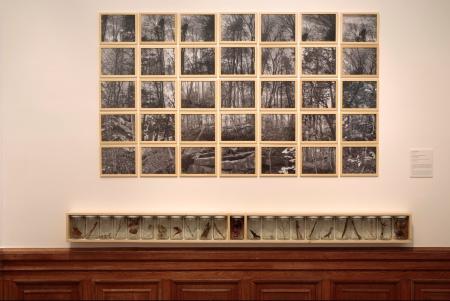 Alan Sonfist: New York City fáinak génbankja, 1974, kép forrása: Szépművészeti Múzeum